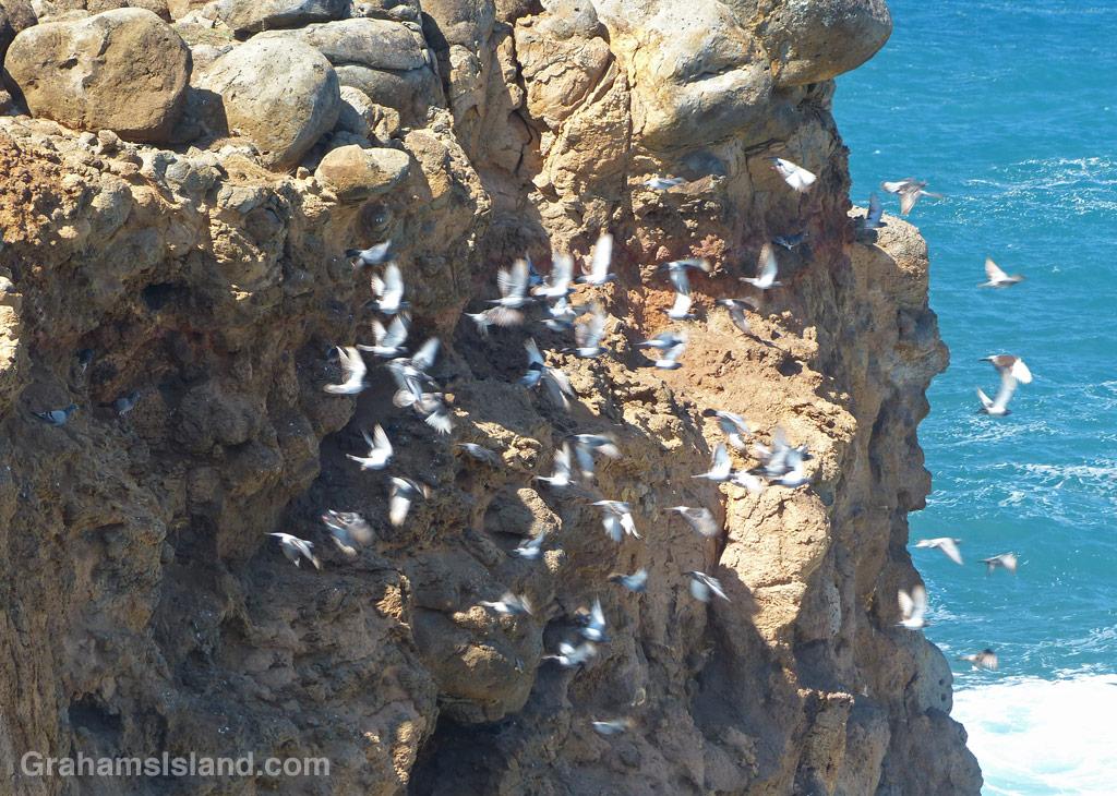 Rock pigeons take off