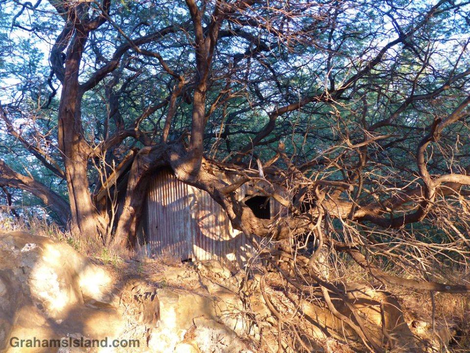 Better Days: Tree House?