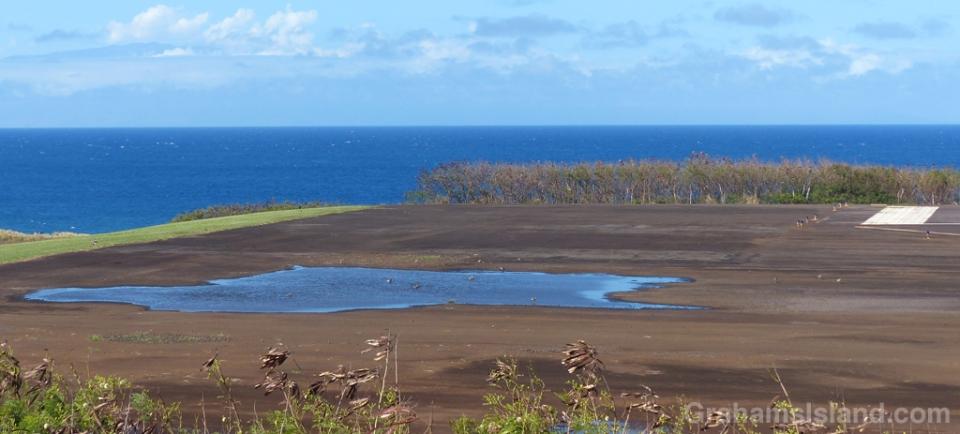 12-28-15-Pacific-Golden-Plover2-HW