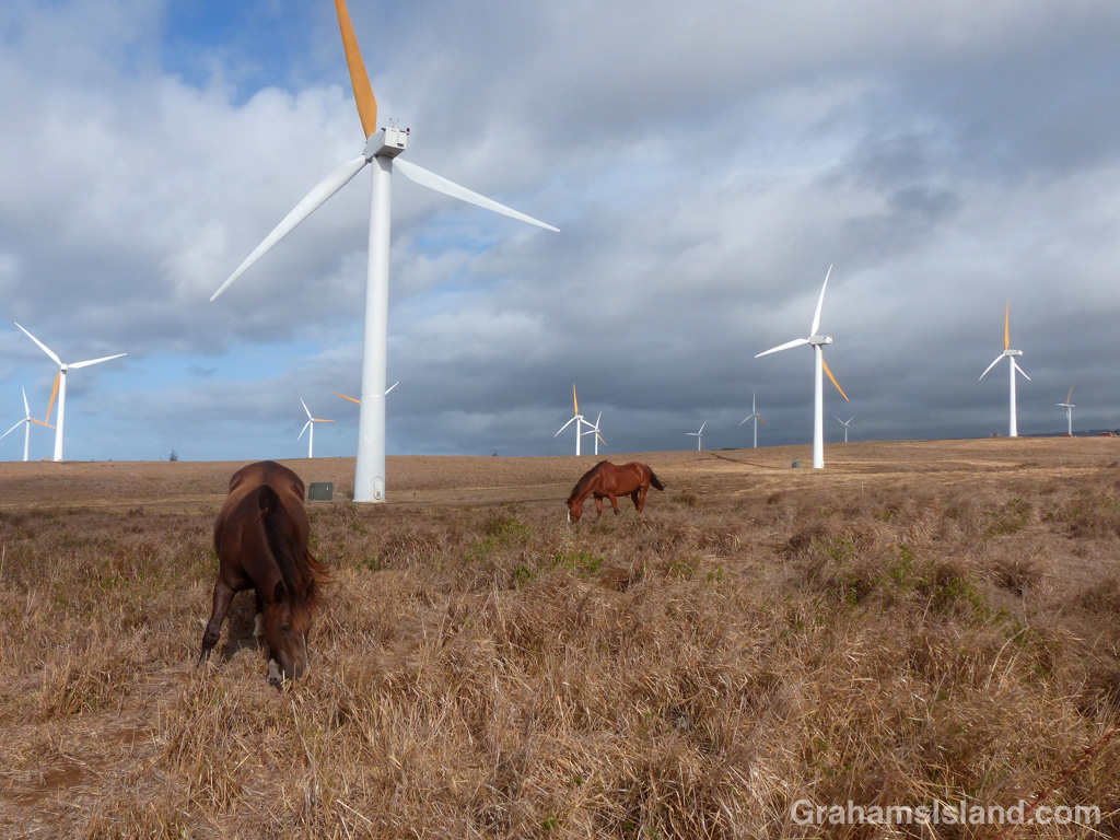 Horses and Turbines
