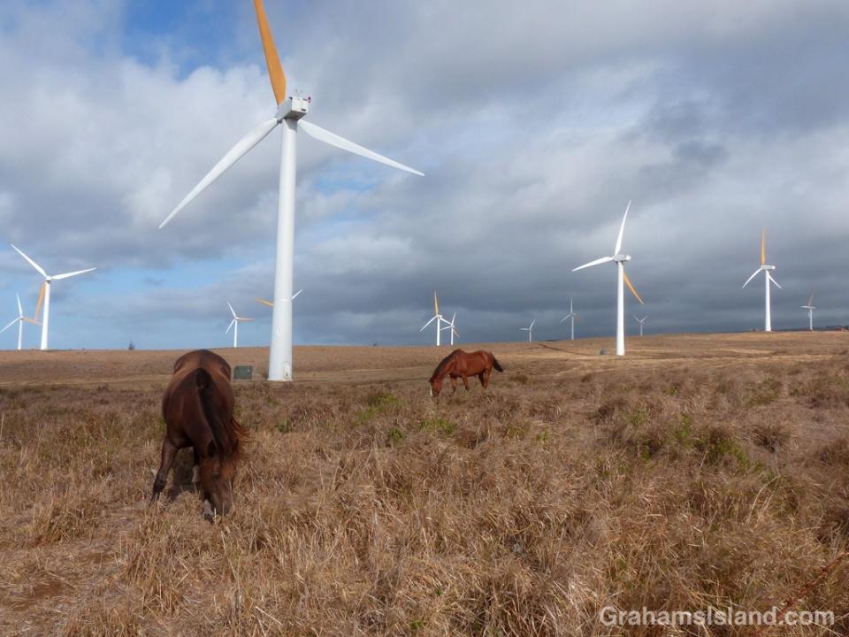 Horses and Turbines