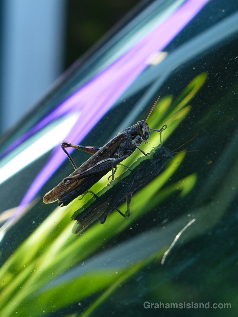 Abstract: Grasshopper reflections