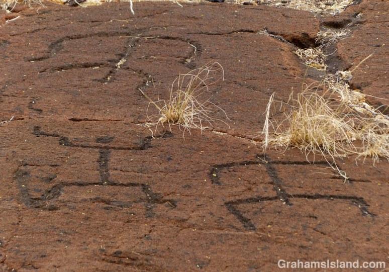 Puako Petroglyphs