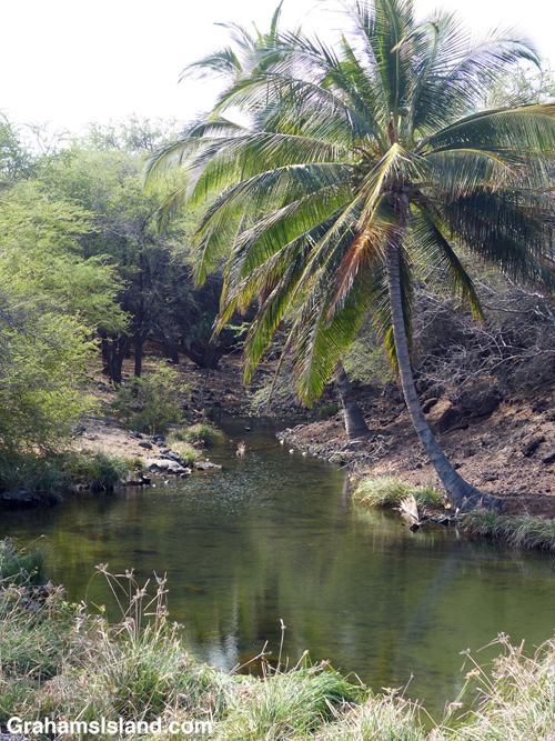 The anchialine pool at Kiholo