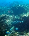 Many fish make the reef home