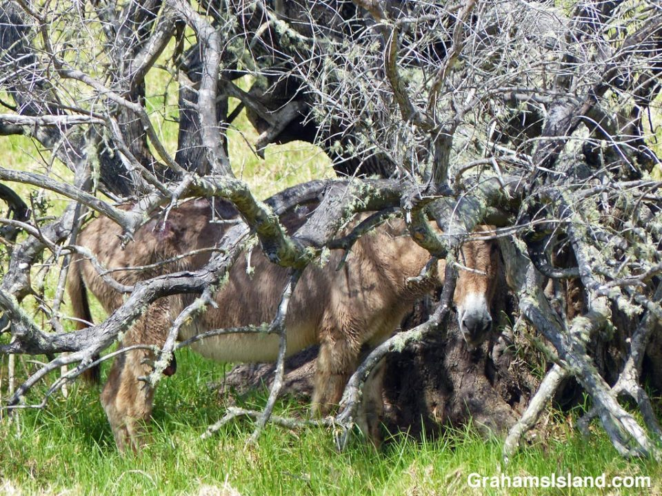 A donkey shelters under a tree