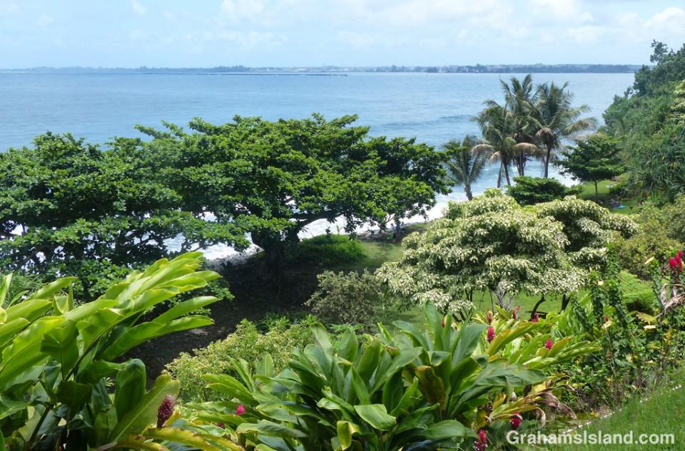 Honoli'i Beach Park on the east side of the Big Island.
