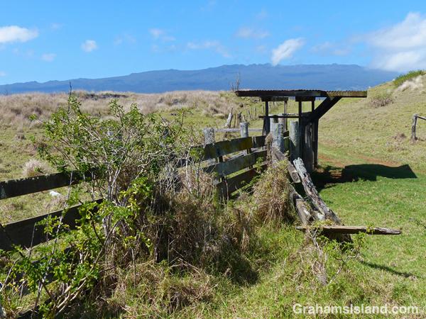 Tamaki Corral was used by the old Pu'u Wa'awa'a Ranch.
