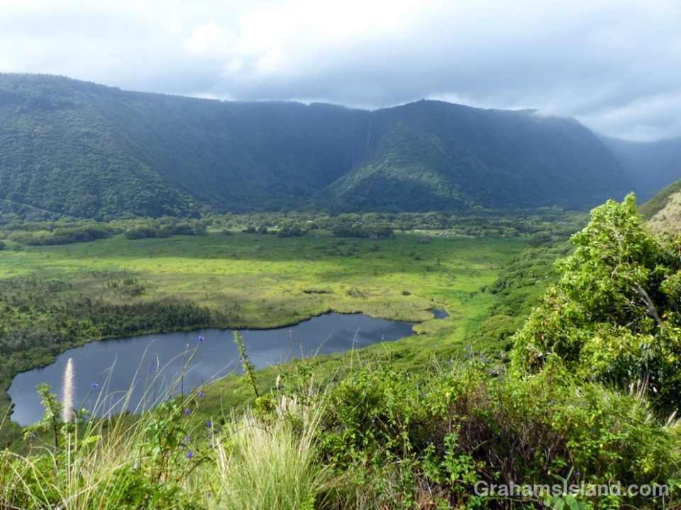 Waipi'o Valley with Hi'ilawe Falls in the distance, seen from a viewpoint on the Muliwai Trail which leads to Waimanu Valley.