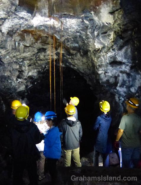 Ohia roots hang in the Puapo'o Lava Tube