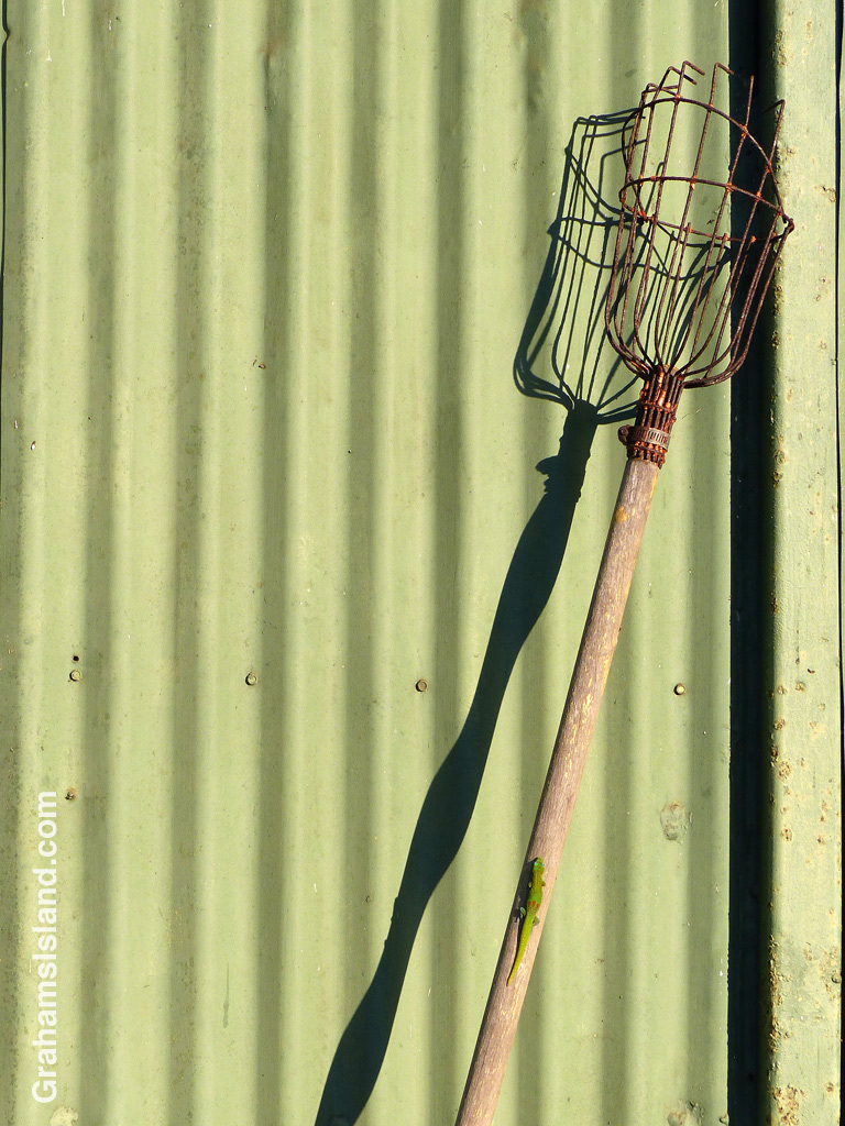 Leaning against a corrugated shed, a fruit picker casts a strong shadow in the late afternoon.