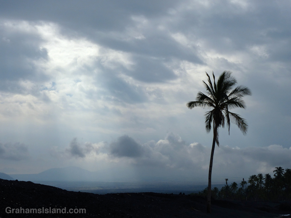 The lone palm at Keawaiki stands out against a cloudy sky.