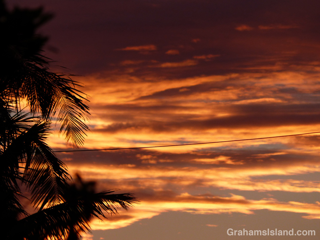 Palm trees silhouetted against a Kohala sunset.