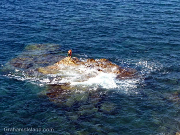 A man harvests opihi off the coast of the Big Island of Hawaii.
