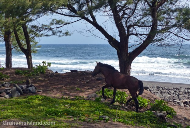 The wild horses of Waipi'o Valley have some very nice territory in which to roam.