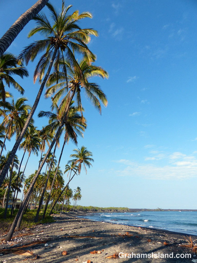 Coconut palms line the beach north of the park at Kiholo on the Big Island.