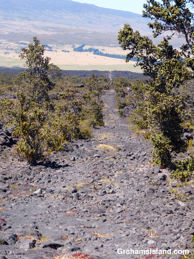 The very straight Powerline Trail heads south off of Saddle Road on the Big Island of Hawaii
