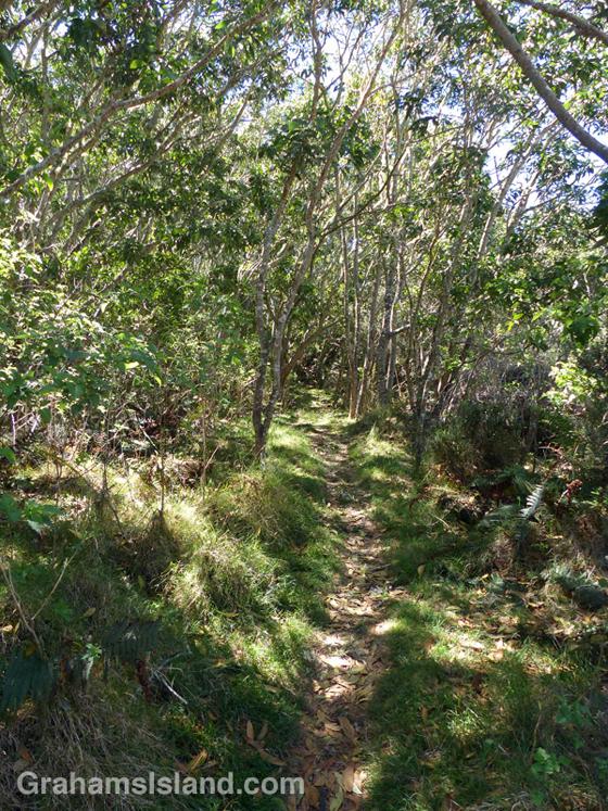 A kipuka on the Pu'u O'o trail off Saddle Road on the Big Island of Hawaii.