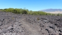 A kipuka on the Pu'u O'o trail off Saddle Road on the Big Island of Hawaii.
