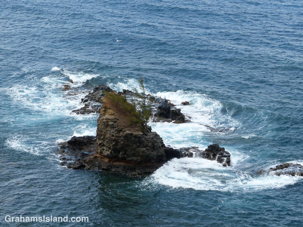 A tropicbird wheels over an islet, and its lone, tenacious tree, off the North Kohala coast.