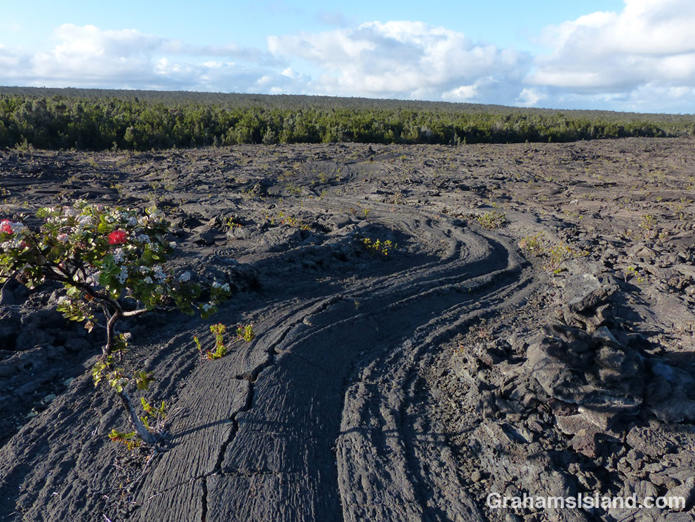 A surface lava flow on Napau trail.