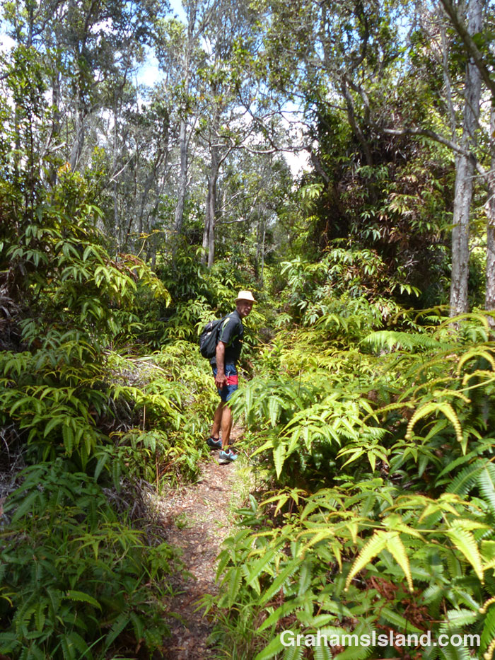 The Napau Trail passes through dense forest.