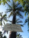 A sign warns about falling coconuts on the Big Island of Hawaii