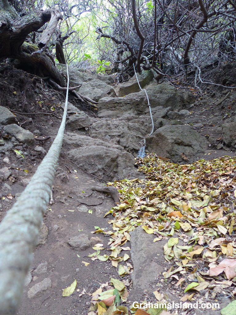 A steep part of the rope section on Honokane Nui Valley trail