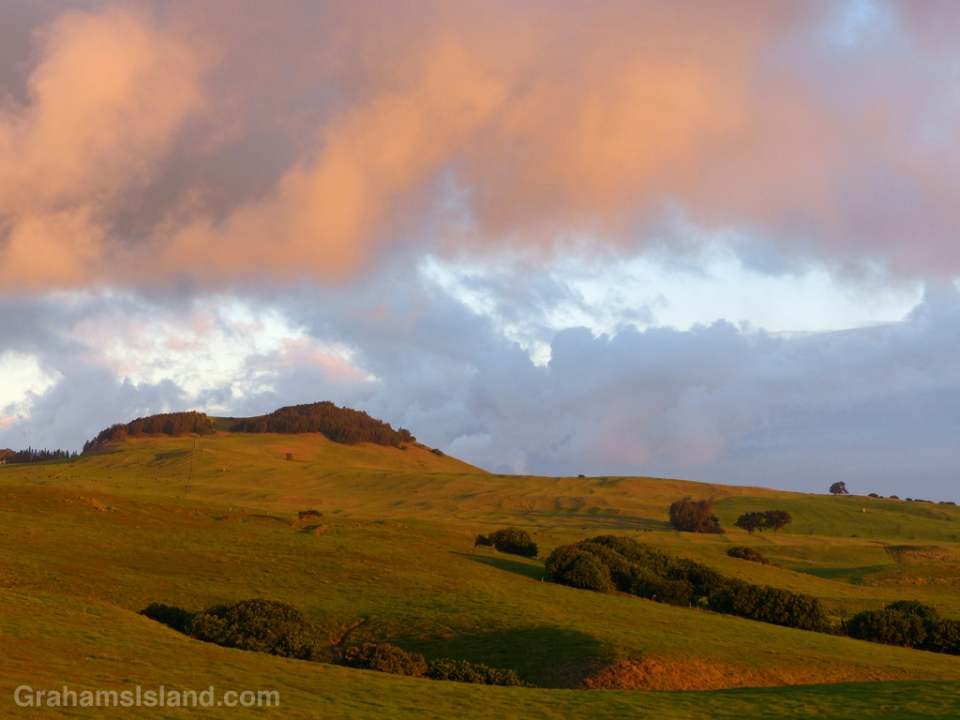 The rolling pastures of the Kohala hills