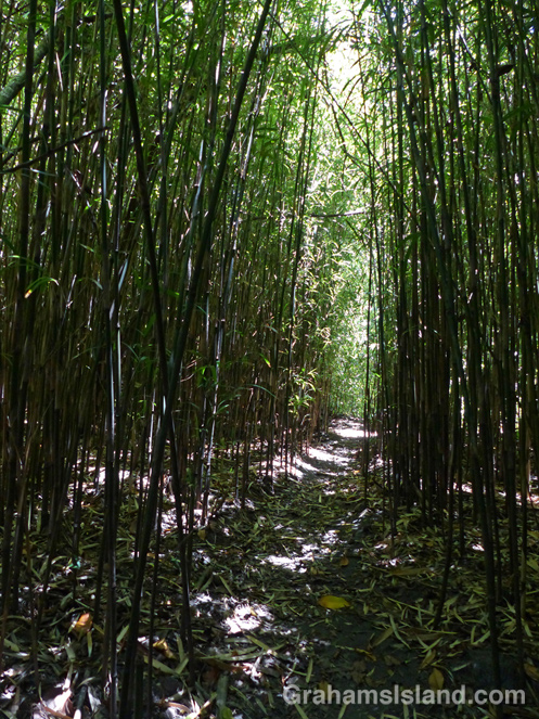 The trail to Honokane Nui Valley passes through tree-shaded clearings, tropical-leafed tunnels, and bamboo canyons.