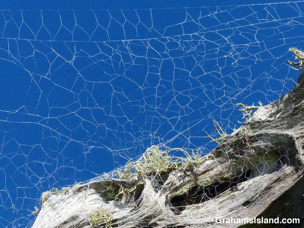 A spider's web attached to dead wood
