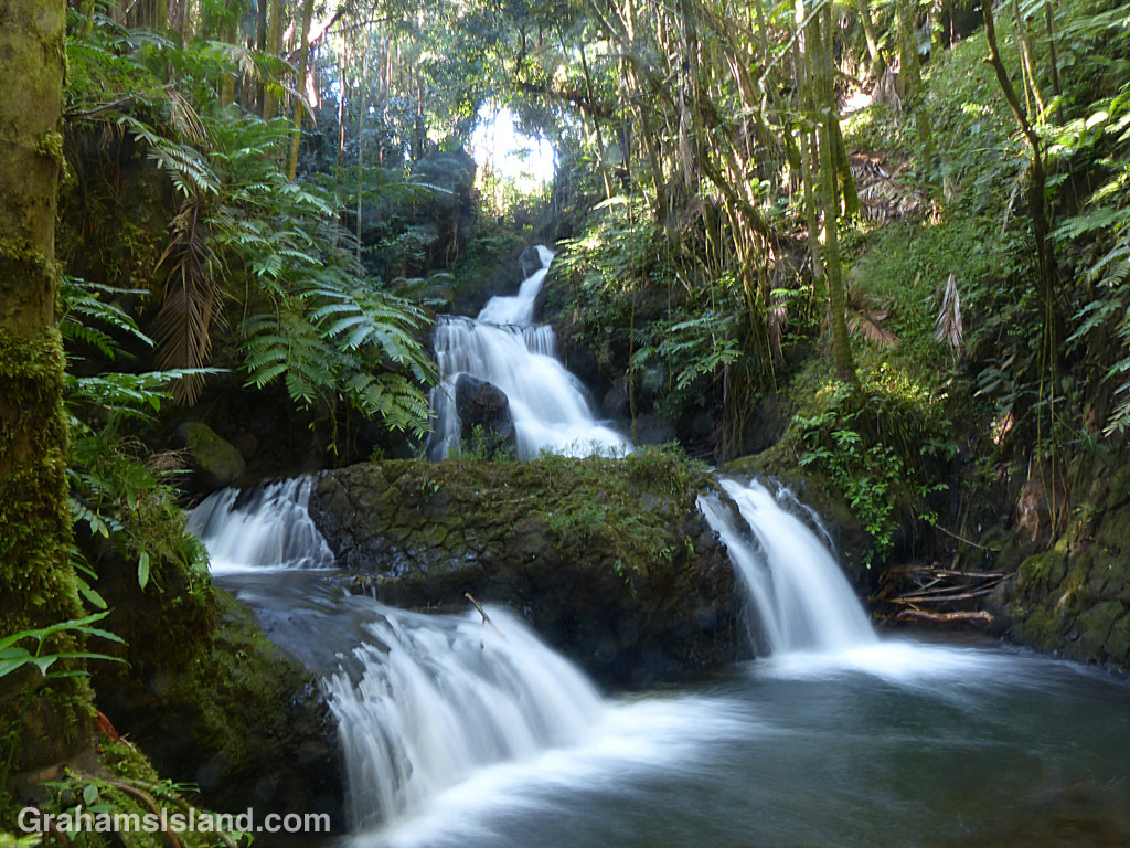 The Onomea Waterfalls at Hawaii Tropical Botanical Garden north of Hilo