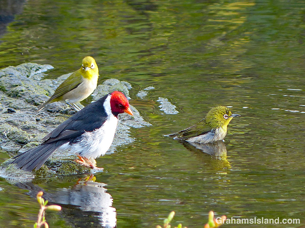 Birds bathing in a pond at Place of Refuge