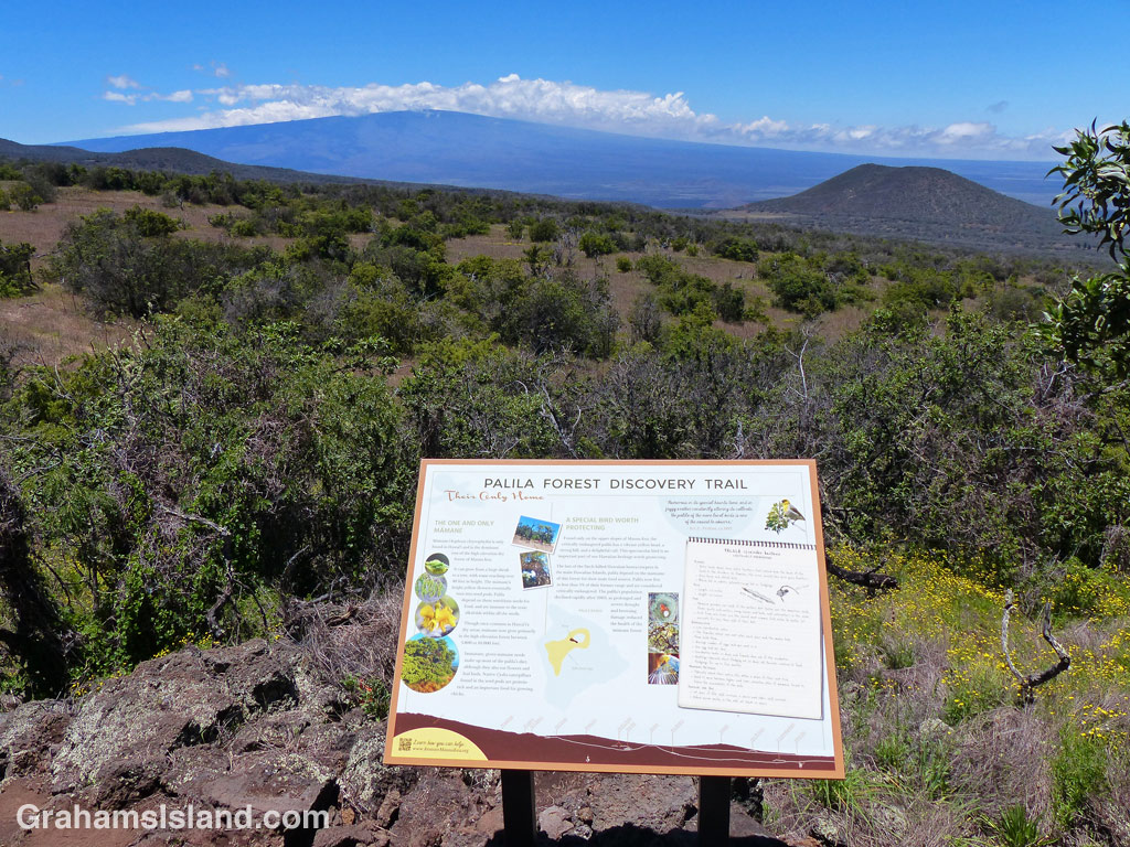 View of Mauna Loa from Palila trail