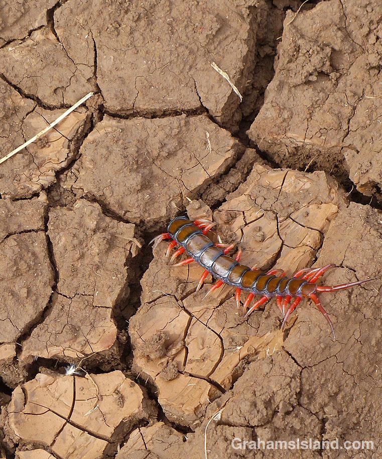 Centipede exploring