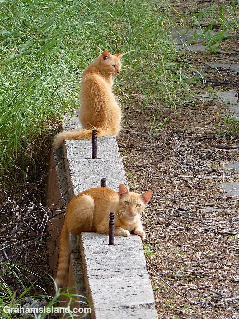 Orange feral cats
