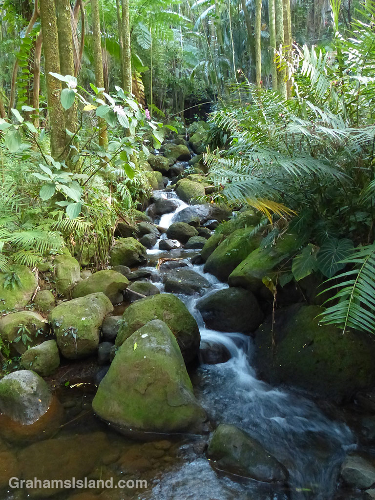 Tropical Stream