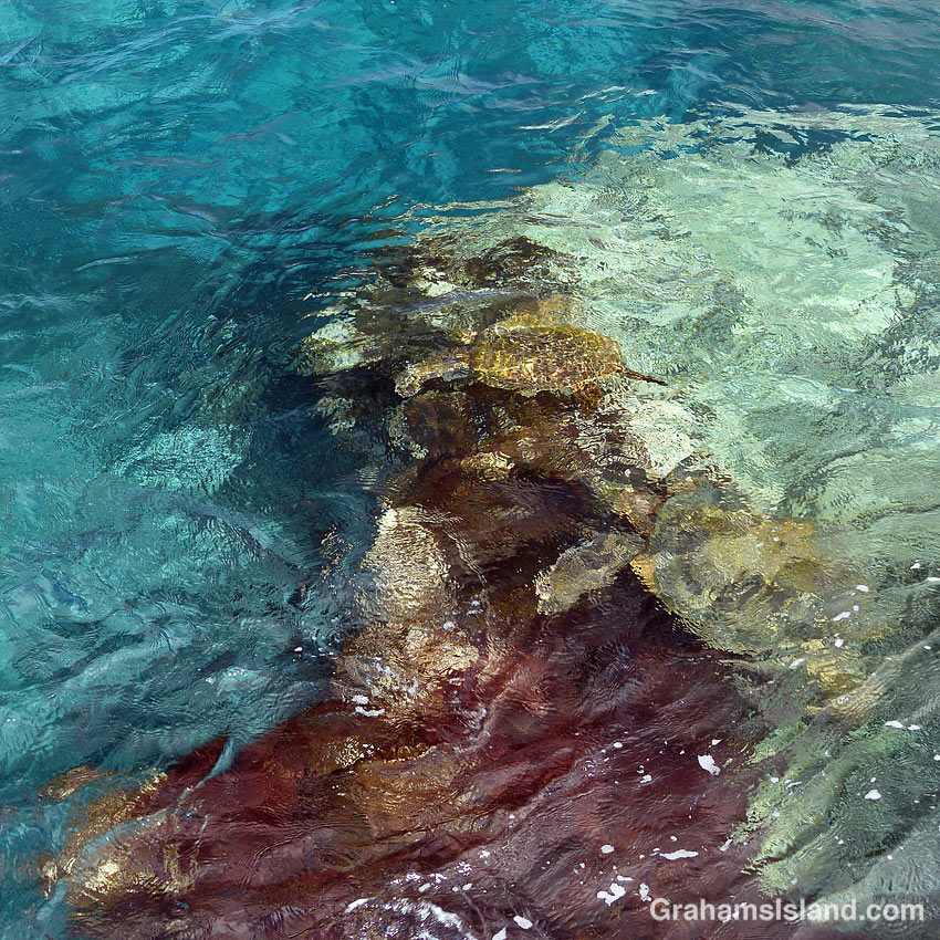 Abstracts-Green turtles