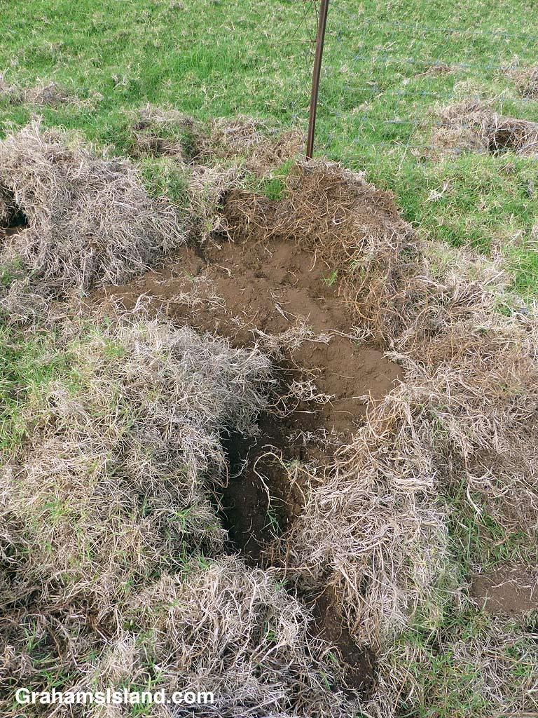 Pig Diggings