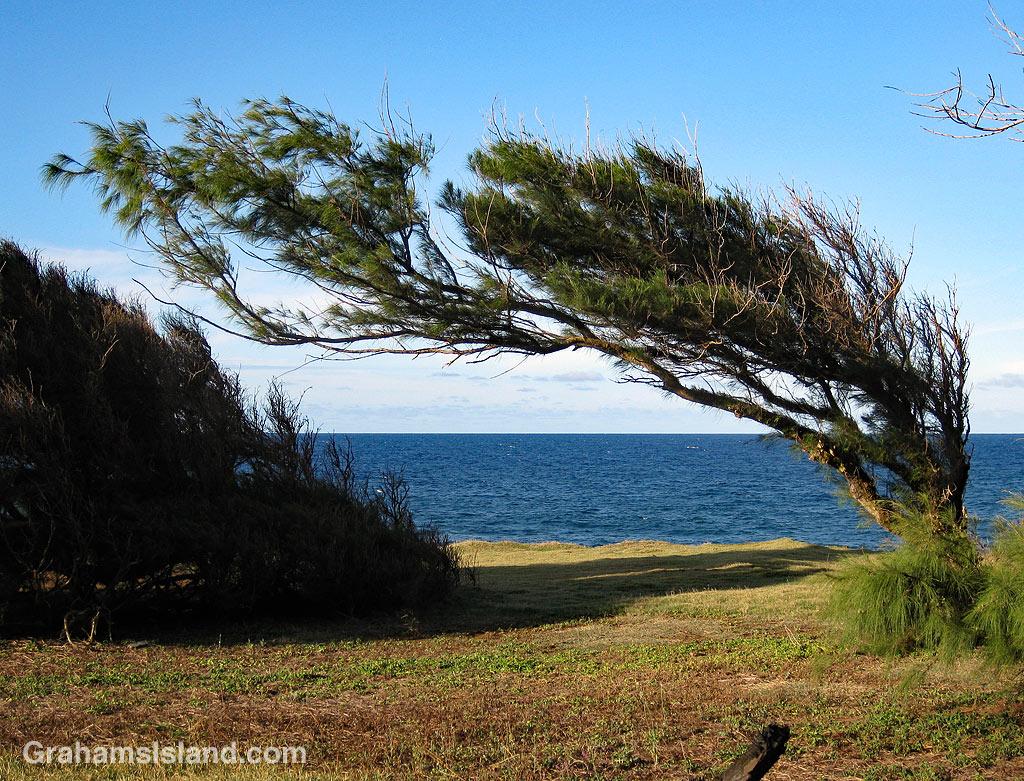 Kauhola Point tree