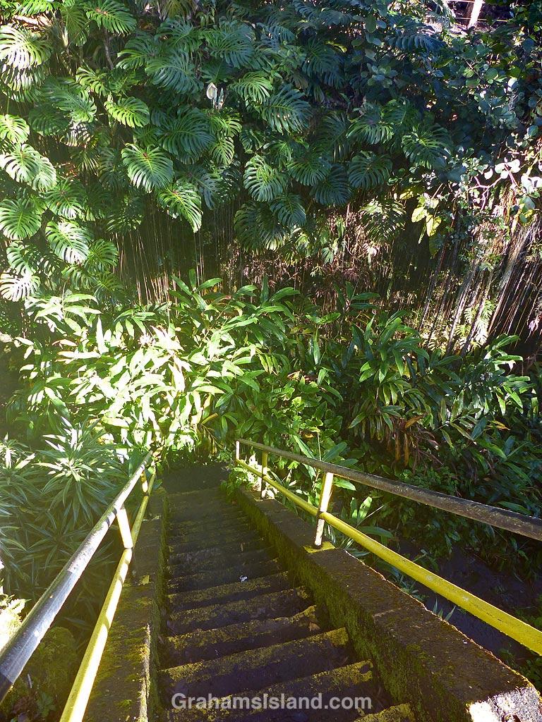 Kaumana Cave access stairs