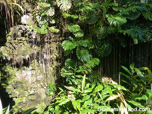 Kaumana Cave tropical foliage