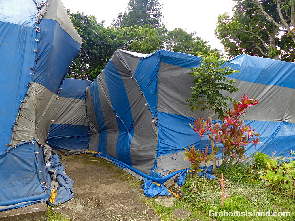 Tenting for termites