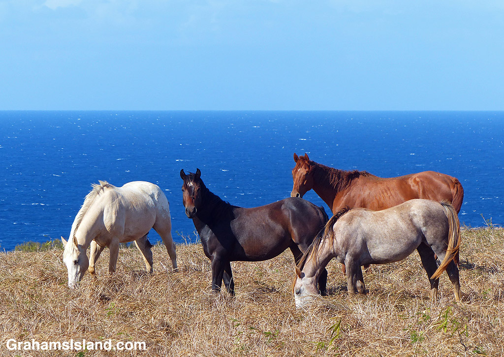 Horses and the ocean