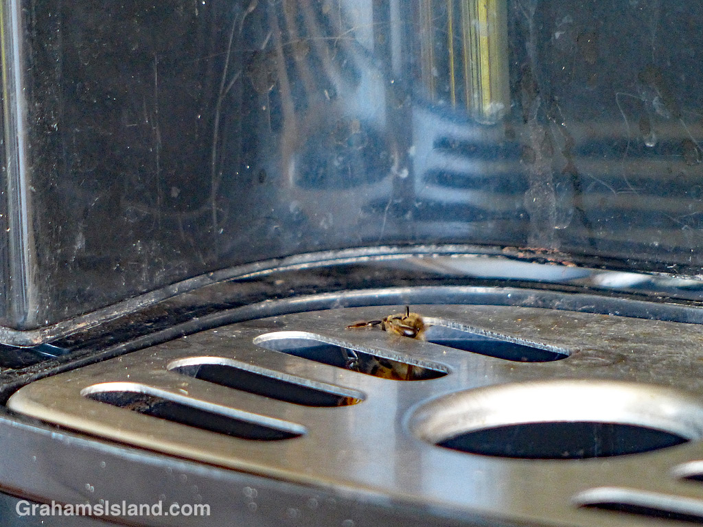 Bee in water cooler