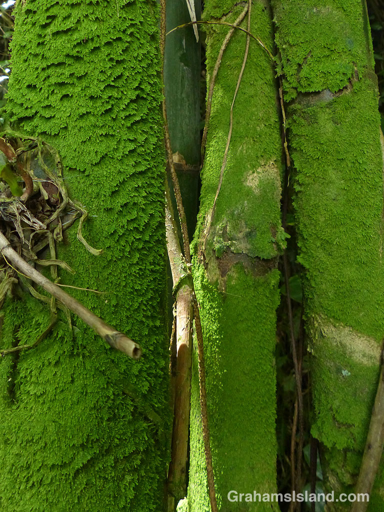 Moss on bamboo canes