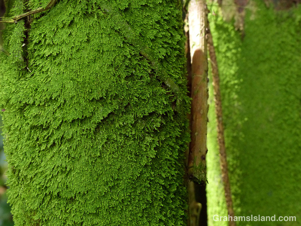 Moss on bamboo