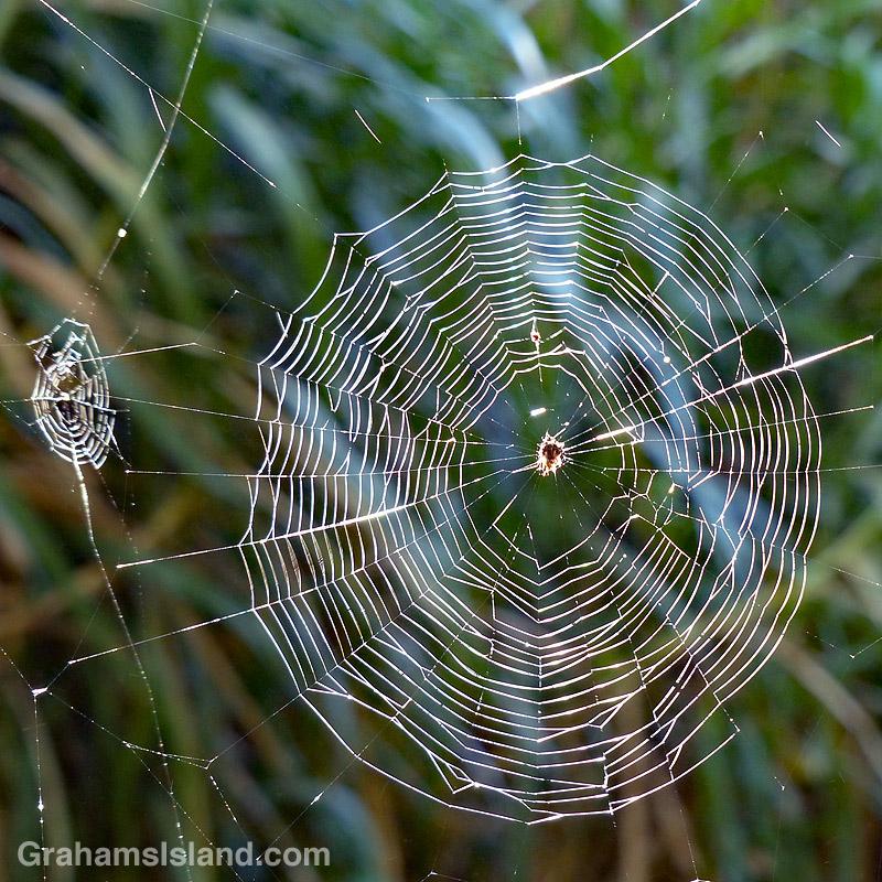 Crab spider web