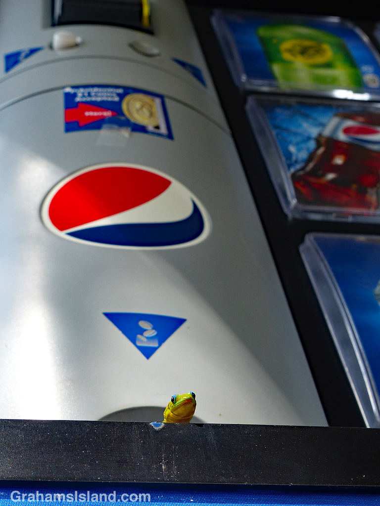 Gecko peers out from Pepsi machine coin slot