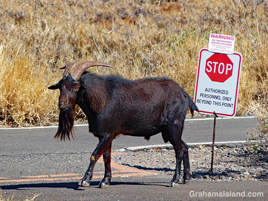 Signs-No goats